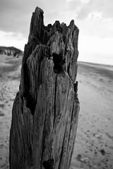 Groyne Strain (ROB KNIGHT photography) Tags: wood old bw mono decay rustic monochromatic groyne humberside spurnhead axeman3uk robknightphotography