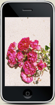free iphone wallpaper summer 2010