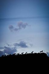 Horses... (JeremyMP) Tags: blue sky horses silhouette statue landscape fun washington interesting nw northwest creative explore eastern ew brilliant tamron1750mm canon7d jeremympiehler
