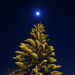 tree and moon at night (rockmixer) Tags: california longexposure moon tree green up pine night stars noflash fir moonlight burbank upwards starlight