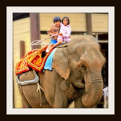Brother And Sister (Ronaldo F Cabuhat) Tags: elephant maine brotherandsister picnik asianelephant yorkswildkingdom yorkbeachmaine proverbs1717 cabuhat marymargaretcabuhat goranbenedictcabuhat