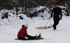backwards (Margaret Stranks) Tags: uk snow oxford backwards february sliding 2009 sledge headington countrypark shotover