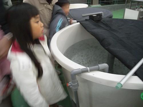 你拍攝的 10鮭魚幼苗。