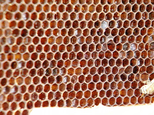 Bees Feb09