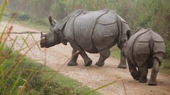 Madonna with child (tomato umlaut) Tags: india rhino assam rhinoceros kaziranga rhinocerosunicornis onehornedrhino colourartaward asianonehornedrhino