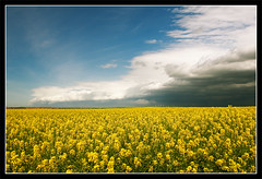 Calm before the storm (DyNastArCoNcePT) Tags: storm arch alberta fields chinook conola