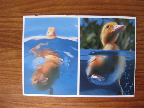 Duck folding postcard, folded front