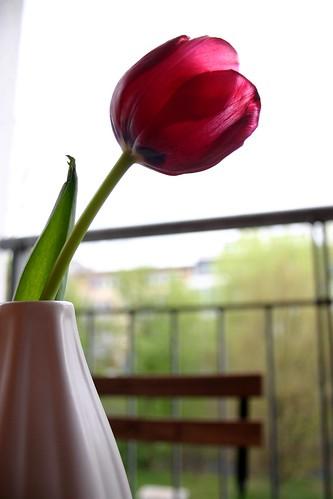 Tulip studies IX
