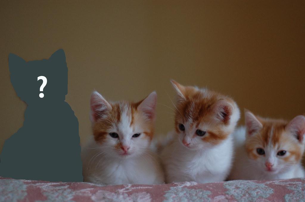Mystery_Kitten