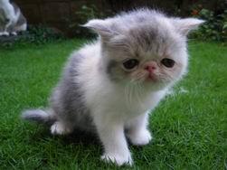 調整大小kitten137_0503221059_163236689