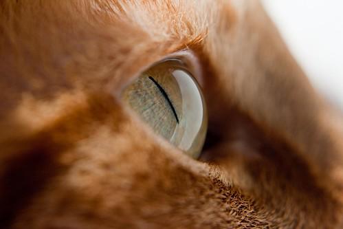 Elle's Eye