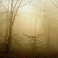 breathing light (Dyrk.Wyst) Tags: morning trees mist texture rain fog backlight forest germany square deutschland mood arboles nebel hometown atmosphere mysterious alemania nrw wuppertal wald bume bergischesland morgen atmosfera niebla nordrheinwestfalen regen stimmung clearin