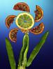 090514 sf 090516 © Théthi (thethi (pls, read my 1st comment, tks a lot)) Tags: fruit orange paprika citron commestible fleur jeu enfant saveur photoshopped bestof2009 faves13 setvegetaux setsaveurs faves19 fac10 setmacro