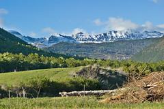 El rebaño volviendo a casa / The flock returning home (Anvica) Tags: mountain huesca shepherd sony flock valle montaña pastor sheeps pyrenees pirineo tena ovejas rebaño tamron90 valledetena a350 paololivornosfriends