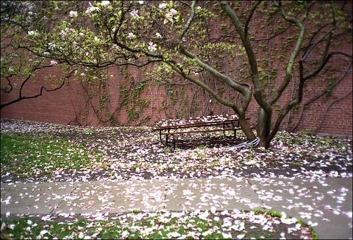 petaled path