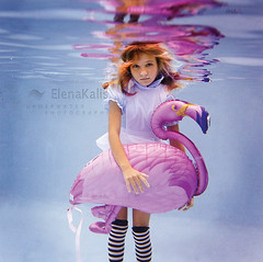 Alice\'s Flamingo