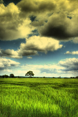 Green Fields in May (Martyn Starkey) Tags: green photography may fields starkey martyn mywinners abigfave vosplusbellesphotos