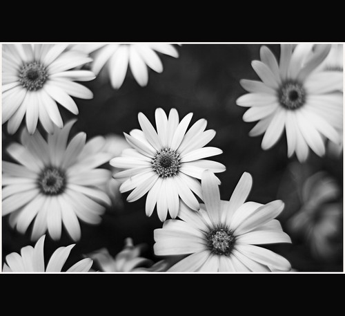 black and white flowers pictures. Pretty Flowers - Black and
