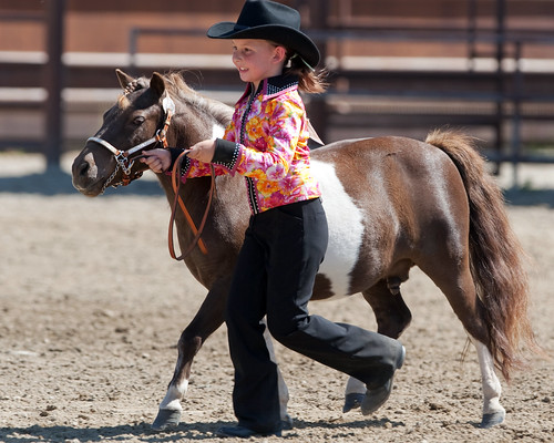 Miniature Horse Show (Photo by Alan Myers)