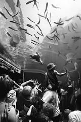 Inverted (margolove) Tags: bear camera columbuszoo columbus ohio people blackandwhite bw fish public animal canon zoo aquarium amusement underwater crowd exhibit polarbear trout digitalrebel xsi