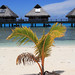 Bora Bora ~ Beachside Palm