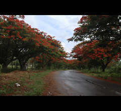 road to makedatu