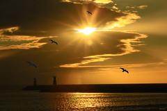 Por de sol em Vilamoura/Portugal (Zza Lemos) Tags: sunset praia portugal water gua canon tramonto barcos gaivotas natureza natur nuvens algarve vilamoura ondas entardecer rochas mygearandme mygearandmepremium mygearandmebronze mygearandmesilver mygearandmegold mygearandmeplatinum infinitexposure pordesolmar