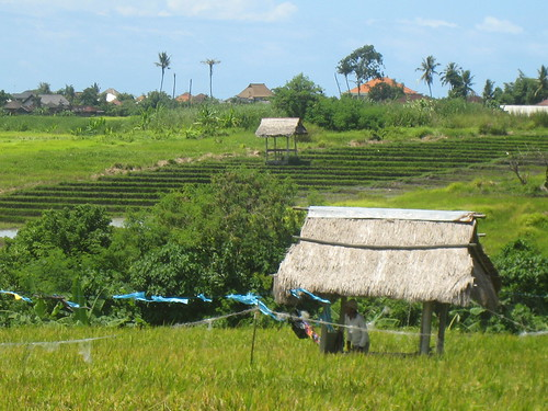 Rice Fields of Bali