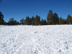 Wing Mountain in Flagstaff, AZ