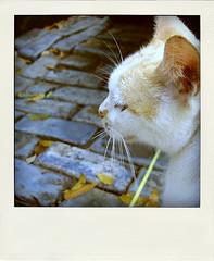 cat2-pola
