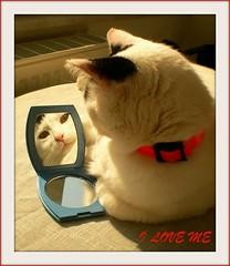 I love me:))) (sevgi_durmaz) Tags: pet beauty animal cat mirror chat sweetie loveyou cuteface iloveme pamuk abigfave bestofcats boc0109 5prettykittycommentspartiv narsistcat beautyofmirror