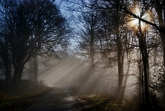 An Angel for a Sunday Morning? (algo) Tags: trees light england photography topf50 topv555 topv333 bravo shadows topv1111 chilterns topv999 rays algo topf100 sunbeams 100f chilternforest 50f