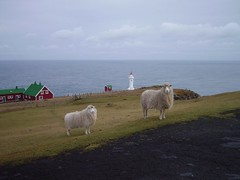 Welcome to Akraberg - The Southern most Place in the Faroes (Eileen Sand) Tags: lighthouse sheep southisland faroeislands viti fyrtrn faroes froyar suuroy seyur suder suduroy akraberg lhfakraberg