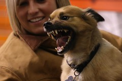 0641 (cathyt71) Tags: dog chihuahua canon rebel texas teeth pomeranian vicious rabid xsi demondog