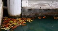 (Nichole Rae Design) Tags: winter orange green fall water leaves dock fallcolors warmcolors