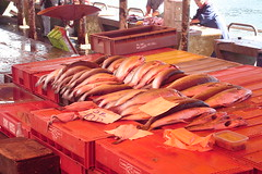 Valdivia, Chile: Fish Market (zJMac) Tags: world chile light red fish standing outdoors daylight day shadows view market watching sunny fresh placement valdivia zjmac