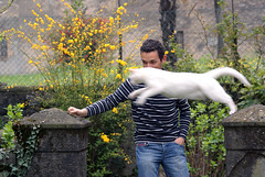 Jumpin' Cat (Italian Film Photography) Tags: cats white cat jumping funny action sony salto gatti azione bestofcats alpha200 catmoments a200dslr nopanningatmyhome
