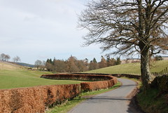 The Beech Hedge (Sh0rty) Tags: road scotland countryside farm country hedge lane fields winding beech