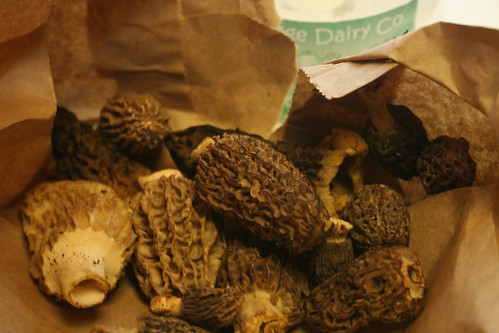 morels mushrooms