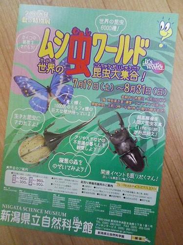 新潟県立自然科学館のチラシ