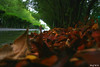 Behind The Tree Leafs ( Explore ) (Nouf Alkhamees) Tags: tree green water rain canon leaf alk nono leafs الكويت مطر nouf اخضر الخميس الاشجار كانون اوراق نوف نونو alkhamees noufalkhamees نوفالخميس