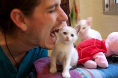 DSC_0929 (eckelon) Tags: gatos leche galletas