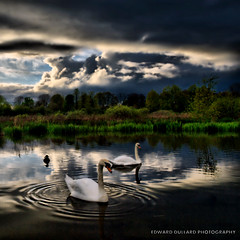 THE CHILDREN OF LIR (Edward Dullard Photography. Kilkenny, Ireland.) Tags: kilkenny ireland sunset sky irish cloud lake nature water birds landscape wildlife eire swans celtic paysage fen hibernia hdr myth mythologies cillchainnigh thechildrenoflir kilkennytourism kilkenny400 edwarddullardphotographykilkennyireland