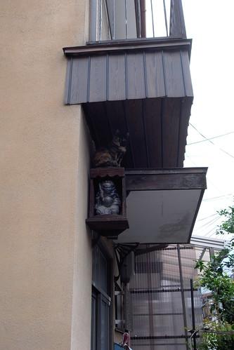 Today's Cat@20090524