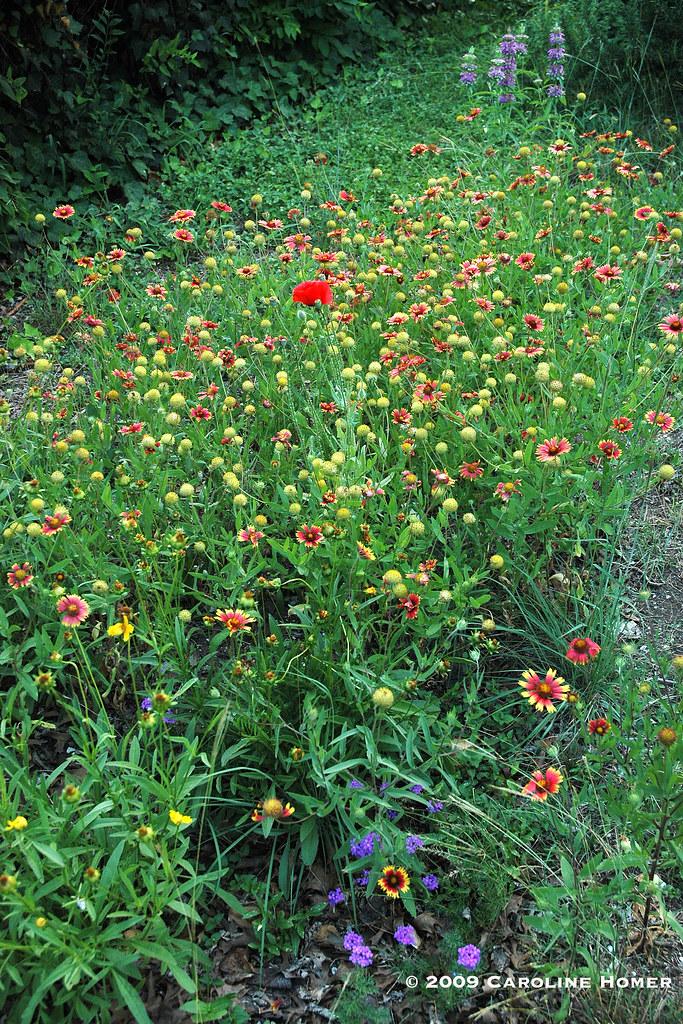 wildflowers9341