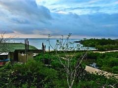 Morning Light ~ Santa Cruz Island (Houry Photography -on/off) Tags: morninglight ecuador galapagos canonrebelxt santacruzisland puertoayora finchbay viewfromroomwindow