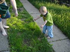 2009.05.17-Grass.07.jpg