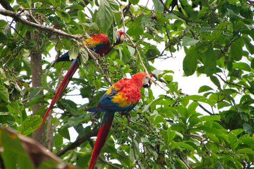 Parque Nacional Corcovado-050
