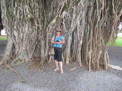 Under a banyan tree, Hilo