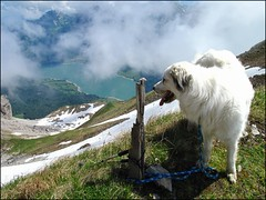 Diethelm 089 (Shepherd & his Hot Dogs) Tags: schnee panorama lake snow mountains alps fog clouds schweiz switzerland landscapes nebel hiking wolken berge climbing alpine alpen mountainpath bergwandern gipfel bergweg diethelm summits mountainhuts wgitalersee wgital kantonschwyz berghtten fluebrig shepherdhishotdogs cantonofschwyz